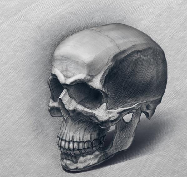 Wild Skull Drawing