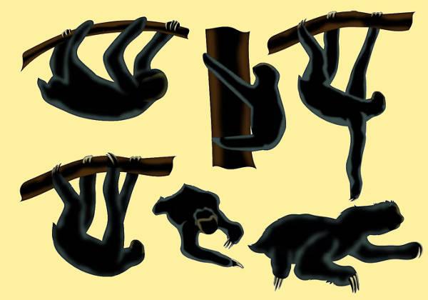 Wildlife Sloth Animal Silhouette