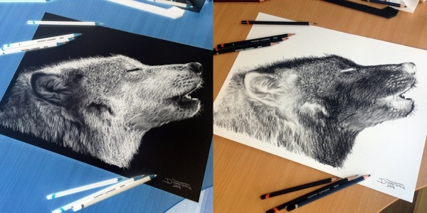 wolf inverted pencil drawing