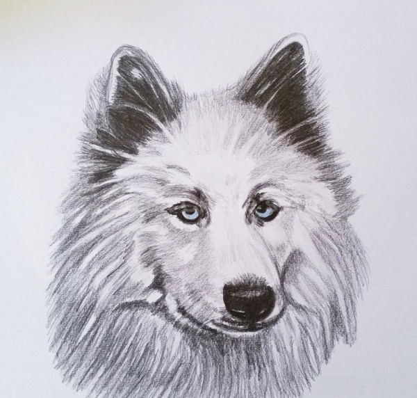 Wolf Totem Animal Drawing