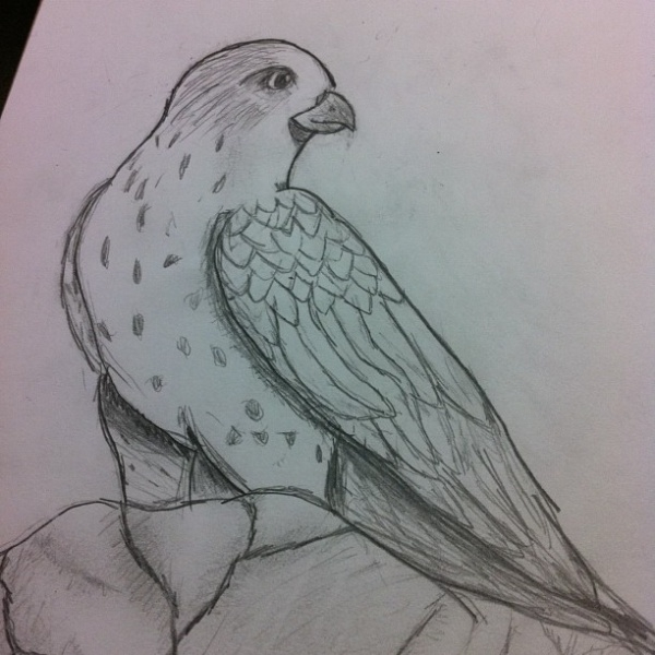 Highly Editable Bird Drawing