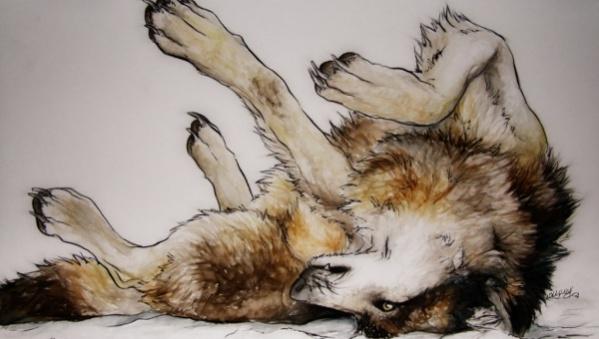 17 wolf drawings jpg psd ai illustrator download