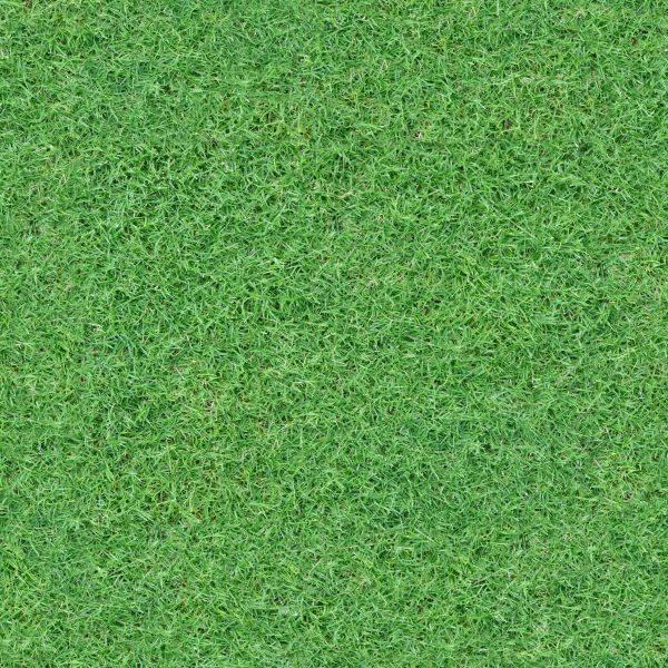 Amazing Grass Texture
