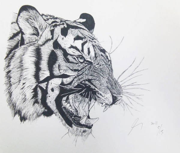Angry Tiger Drawing