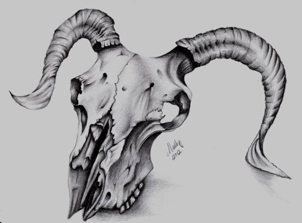 Animal Skull Drawing
