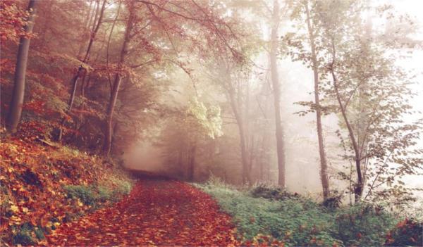 Autumn Fall Photography