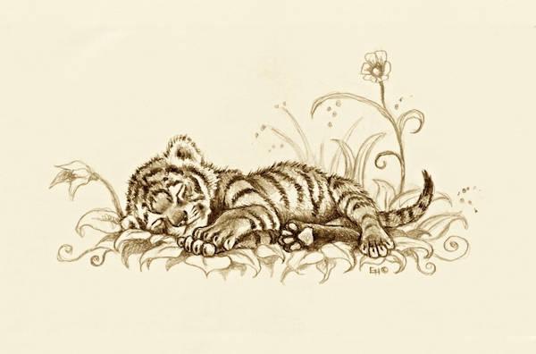 Baby Tiger Sleeping Drawing
