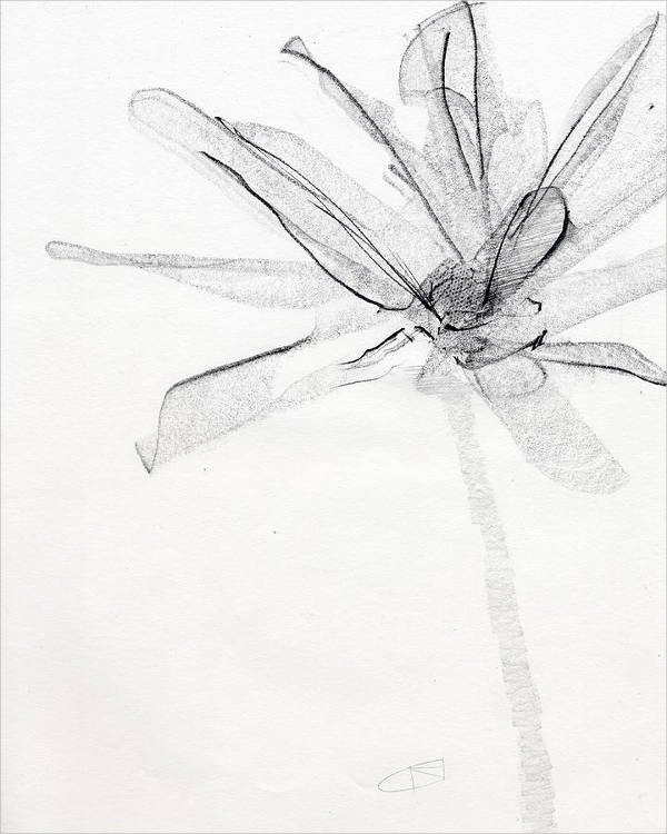 Beautiful Flower Drawing
