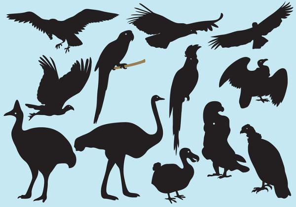 Big Bird Silhouettes