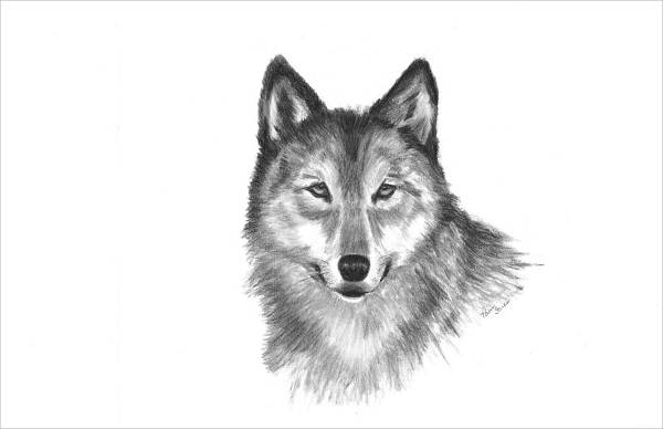 black and white wolf drawing