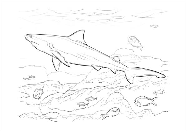 9 Shark Coloring Pages Jpg Ai Illustrator Download