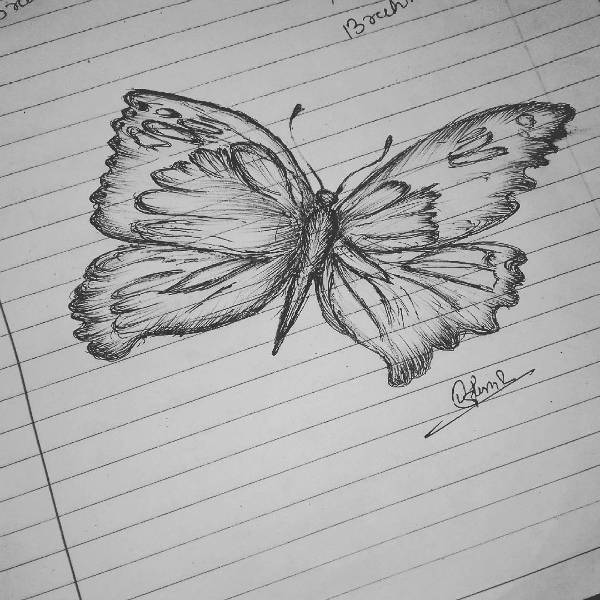 Butterfly Art Drawing
