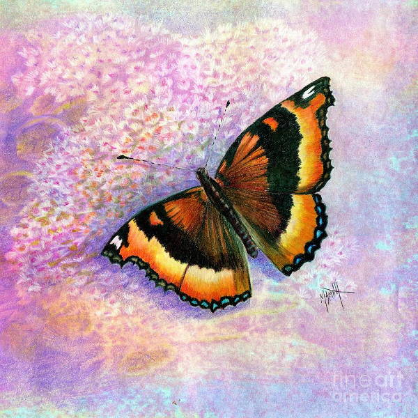Butterfly Drawing with Color