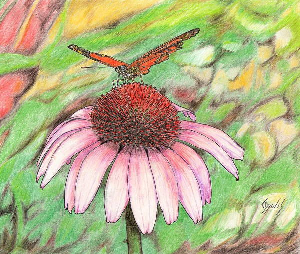 Butterfly on Flower Drawing