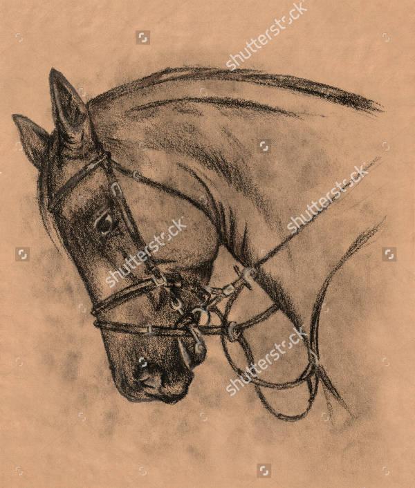 Charcoal Animal Drawing