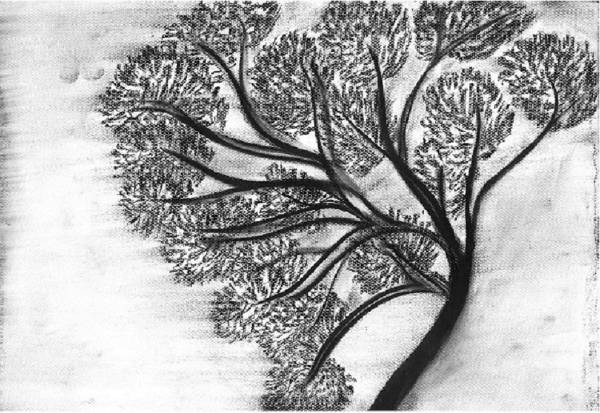 Charcoal Trees Drawing