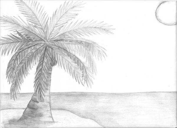 Coconut Palm Tree Drawing