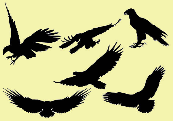 Collection of Eagle Silhouettes