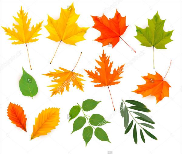 Colorful Leaf Vector