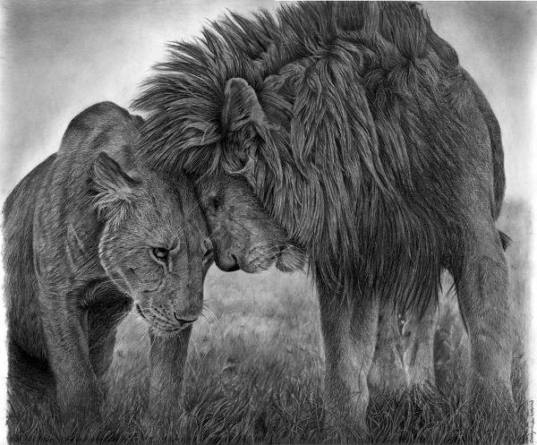 Couple Lion Drawing
