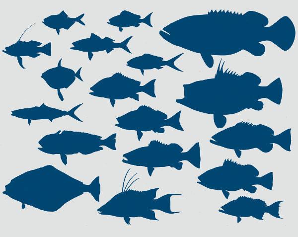 Deep Sea & Reef Fish Silhouette