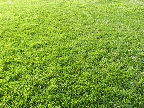 Download Grass Texture
