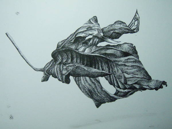 Dry Leaf Drawing