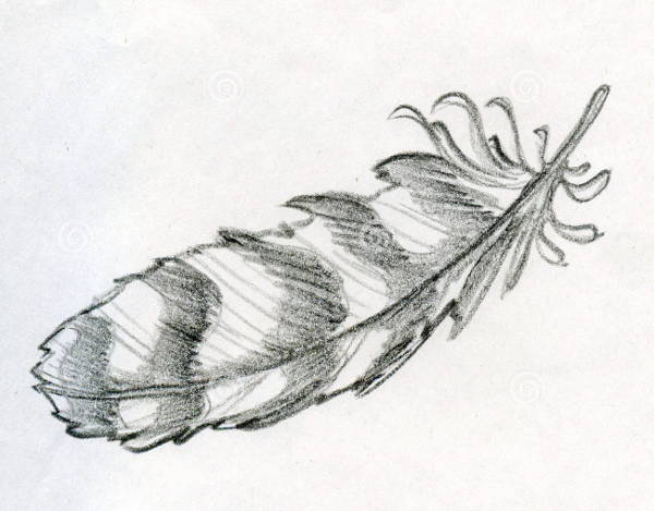 Eagle Feather Drawing