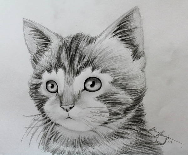 drawing awesome animals animal drawings really amazing kitten hand easy pencil sketches clipart 3d deviantart pencils library clip artwork arch