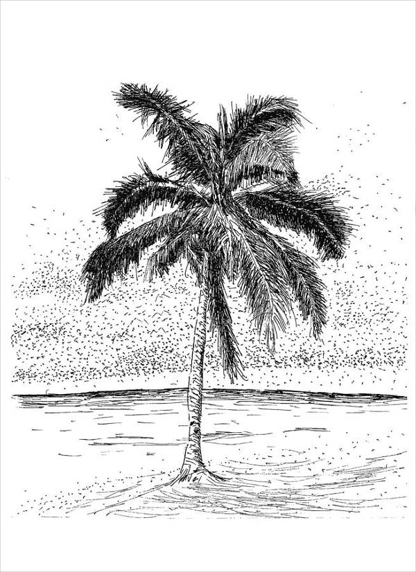 Easy Palm Tree Drawing