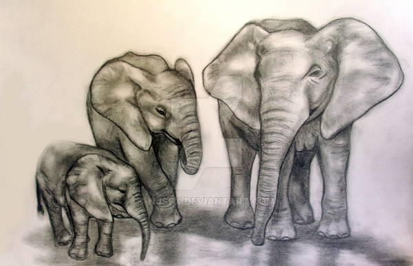 Elephant Pencil Drawing