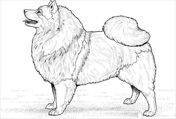 Eskimo Dog Coloring Page