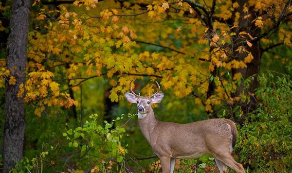 Fall Animal Photography