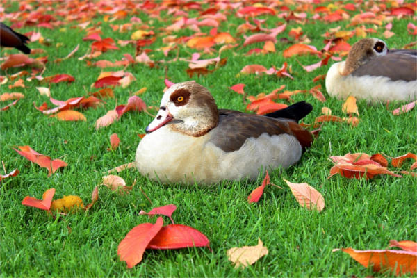 Fall Bird Photography