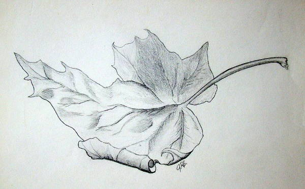 Fallen Leaf Drawing