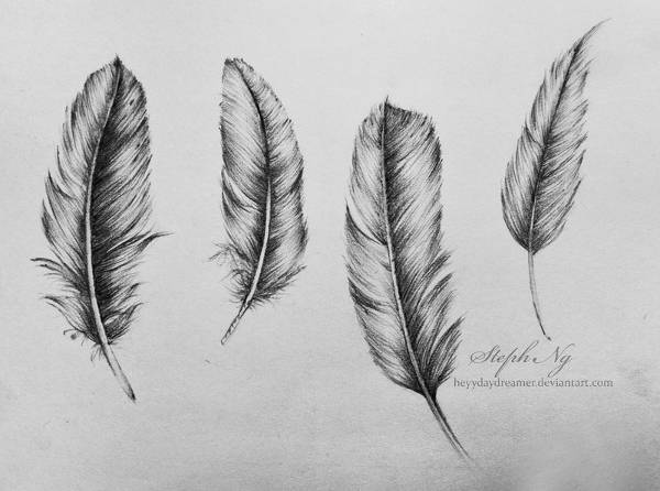 Feather Pencil Drawing
