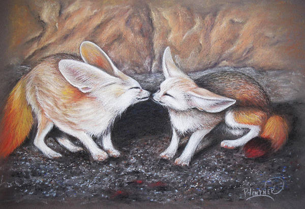 Fennec Fox Drawing