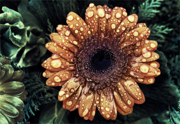 Flower Digital Photography