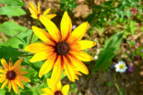 Flower Garden Photography