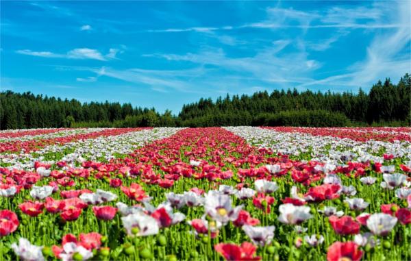 Flower Landscape Photography