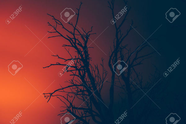 Forest Fire Silhouette