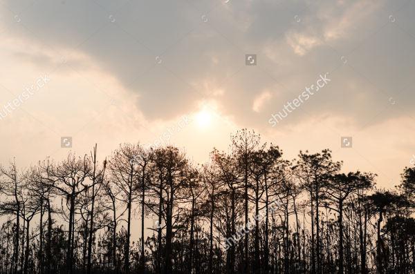Forest Skyline Silhouette