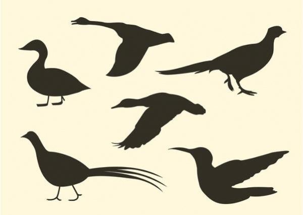 Free Bird Vector Silhouette