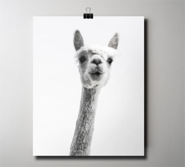 Funny Animal Poster