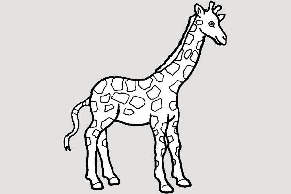 giraffe black and white clipart