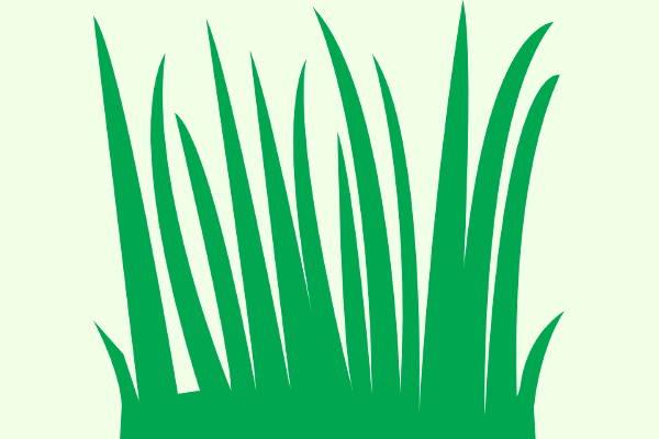 Grass Clipart PNG
