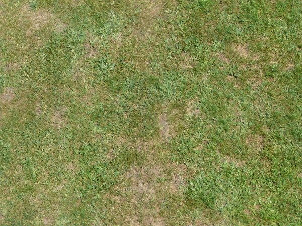 Grass Texture For Free