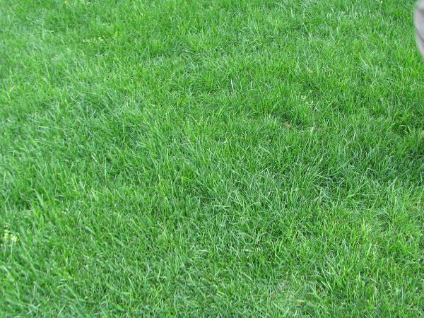 High Resolution Grass Texture