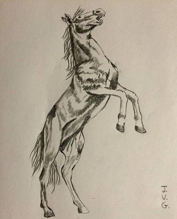 Horse Bucking Drawing