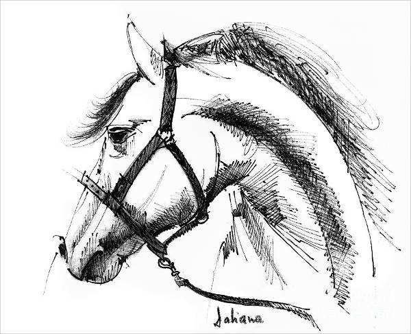 Horse Face Drawing